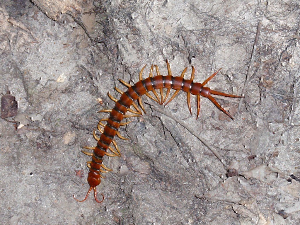 A Military Spouse, a Mop, and a Mutant Centipede… | Military
